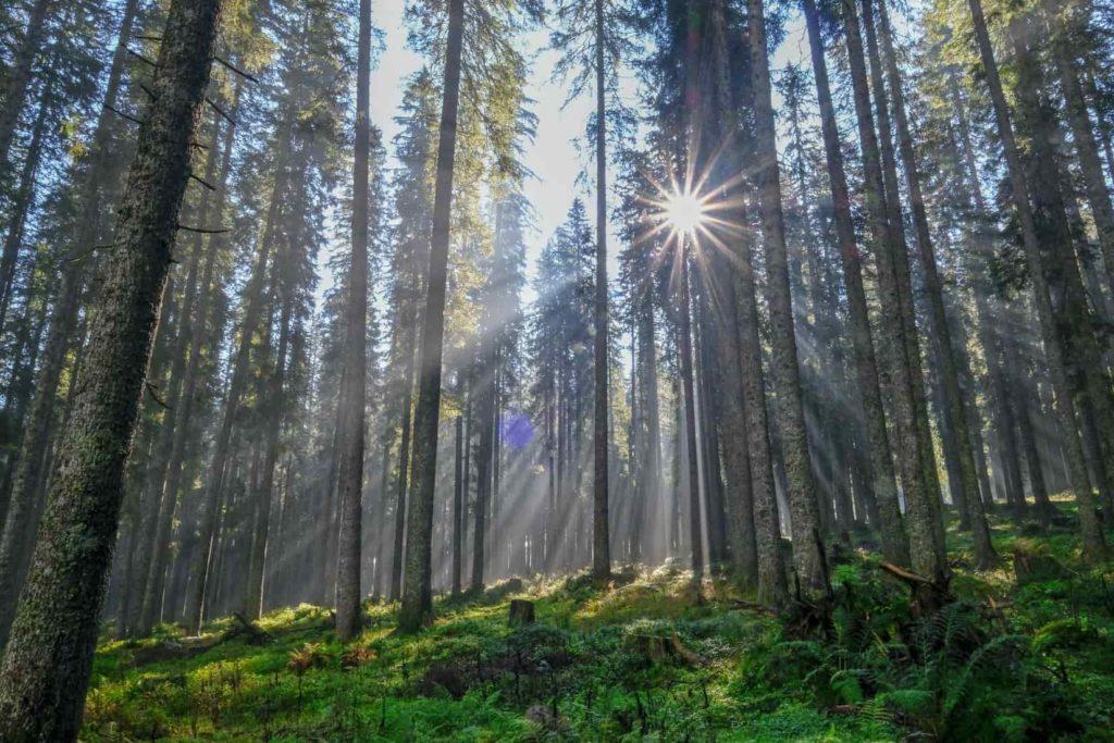 starburst effect in landscape photo