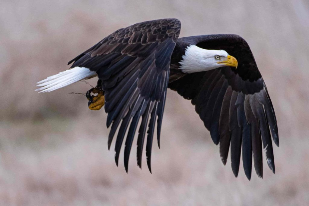 wildlife photography. Aperture in photography