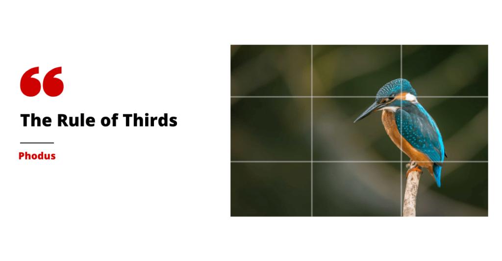 rule of thirds phodus