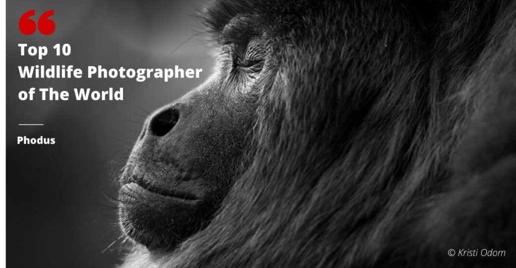 Top 10 wildlife photographer
